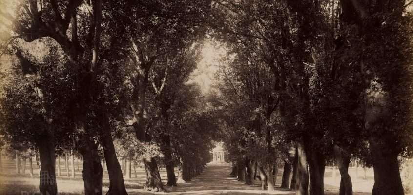 Viale dei Pupazzi (Anderson, 1850 ca)