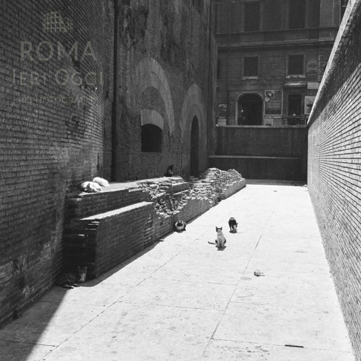 Gatti al Pantheon