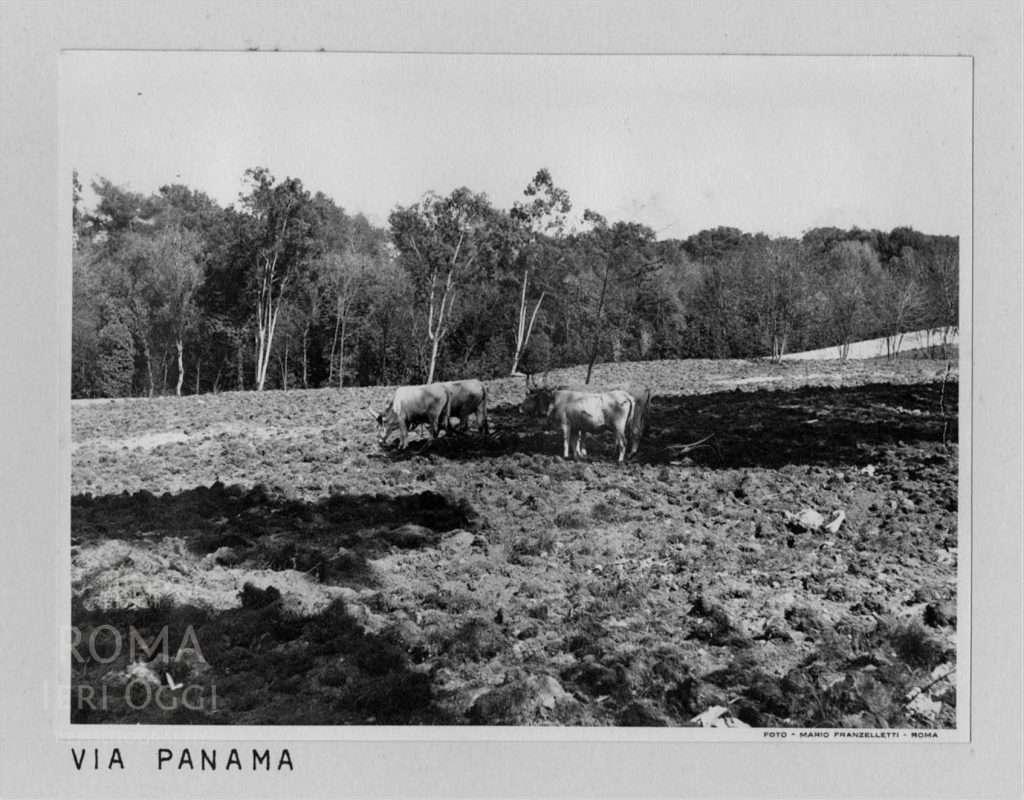Via Panama