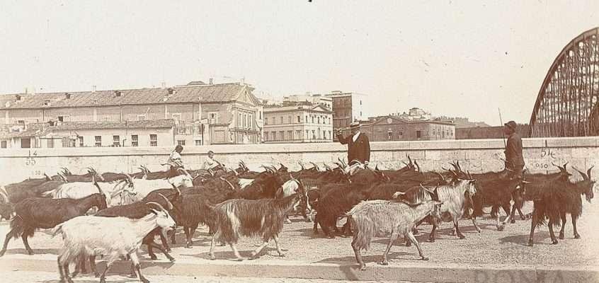 Lungotevere degli Altoviti (Senni, 1895)